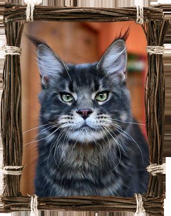 Lynxshadow-Zeit-geist